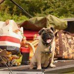 BLOG No.42 愛犬とアクティビティーを楽しもう !