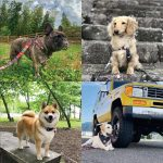 BLOG No.52 DOG BREEDS