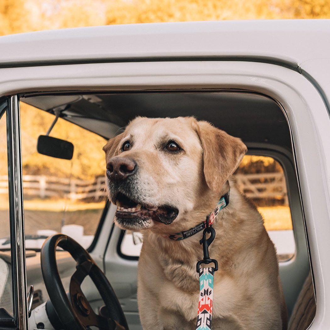 犬によって性格はさまざま、様子を確認してストレスを少なく