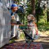 犬とアウトドアを最大限楽しむ!おすすめグッズから注意点まで徹底ガイド