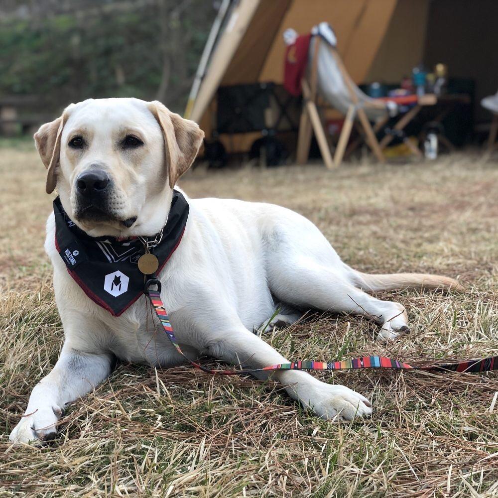 愛犬とキャンプを満喫する方法と準備する持ち物